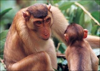 Khỉ mẹ, khỉ con